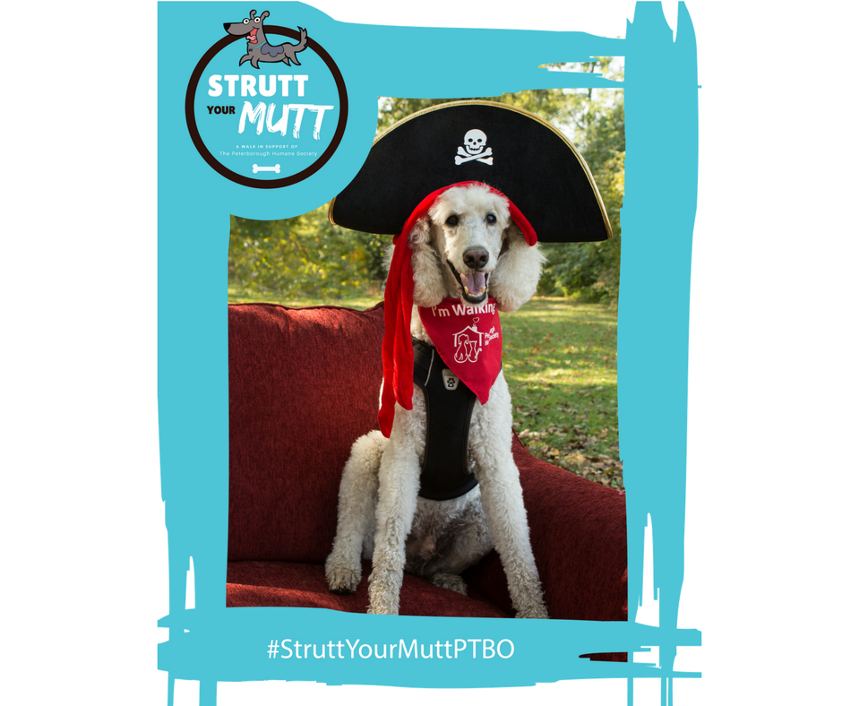 Last Year's Strutt Your Mutt