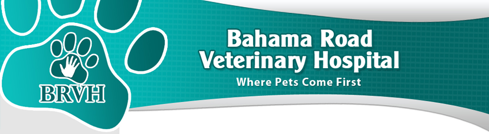 Bahama Road Veterinary Hospital