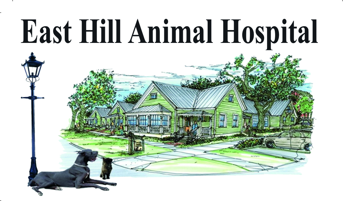 East Hill Animal Hospital