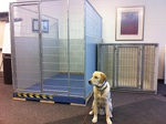 The New Canine Suites
